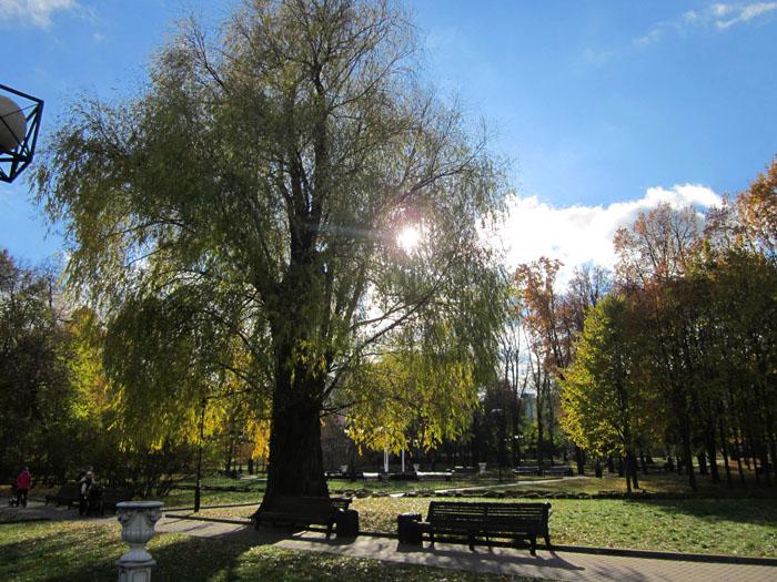 04 Осень в Марьиной роще (700x525, 391Kb)
