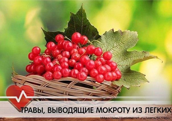 5177462_swWrnsLGBBk (604x426, 160Kb)