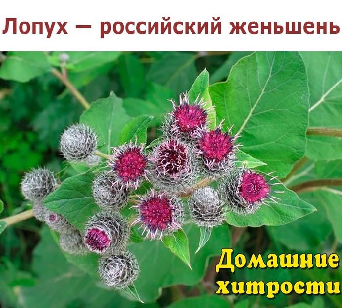 image.jpgлопух (700x630, 129Kb)