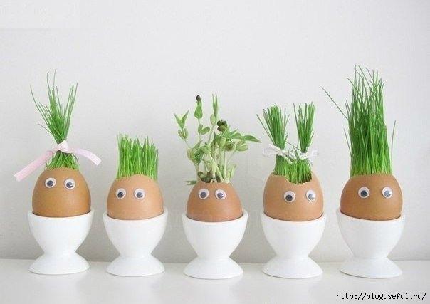 огород в яичной скорлупе