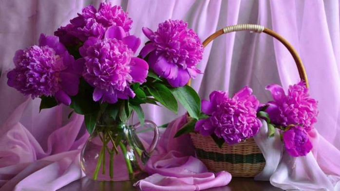 purple-peonies (700x393, 282Kb)