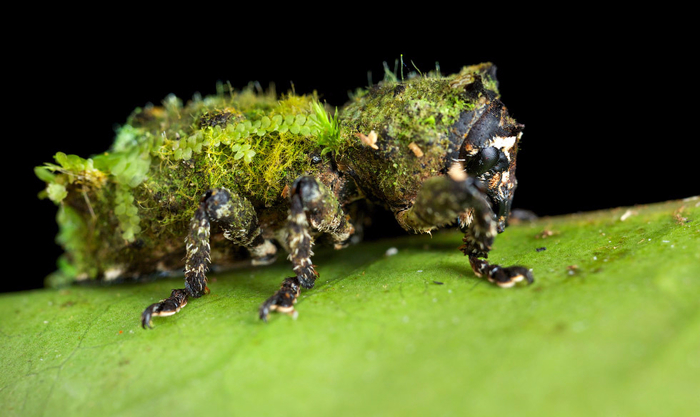 насекомые фото 1 (700x417, 261Kb)