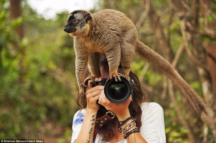 фото дикой природы Шеннон Бенсо 4 (700x464, 339Kb)