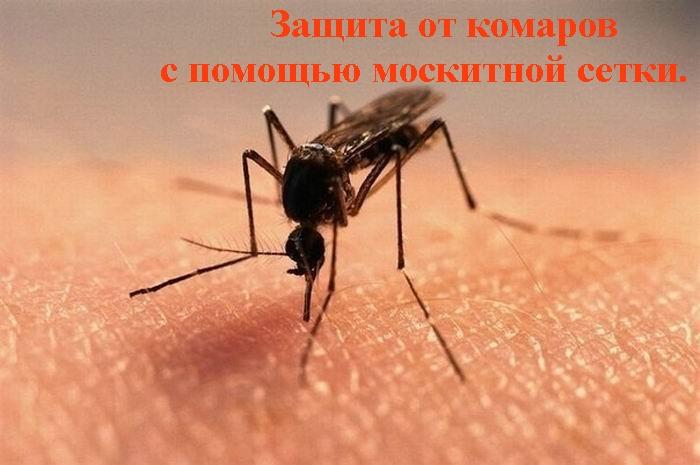 """alt=""""Защита от комаров с помощью москитной сетки.""""/2835299_Zashita_ot_komarov (700x465, 138Kb)"""