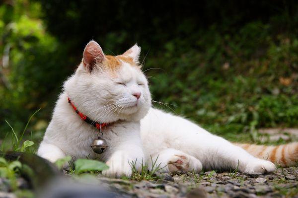 кот Shiro Neko фото 6 (600x399, 35Kb)