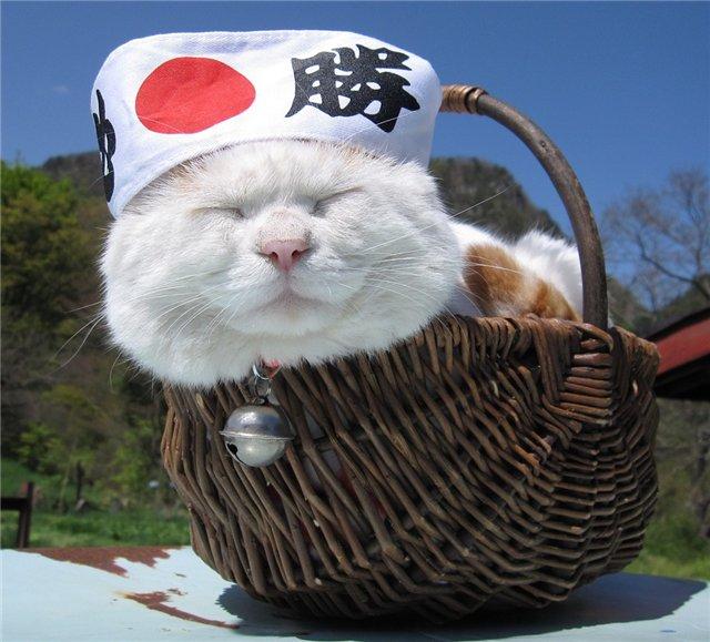 кот Shiro Neko фото 8 (640x579, 73Kb)