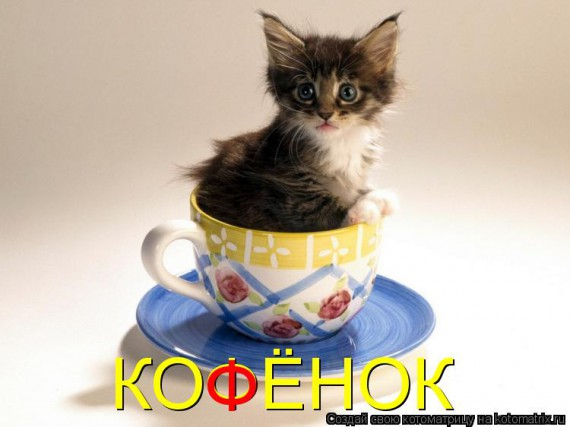 1364488514_99030407_large_kotomatritsa_c1 (570x427, 44Kb)