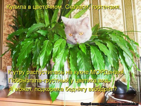 1364488661_99030416_large_kotomatritsa_c1j (570x427, 105Kb)