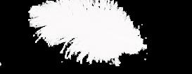 перышки 1 (273x105, 18Kb)