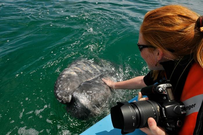 серый кит фото 1 (700x464, 282Kb)