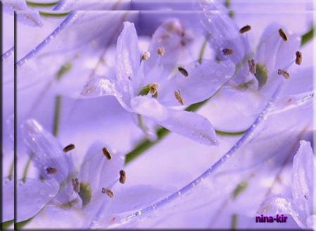 Сиреневая-весна (450x330, 237Kb)
