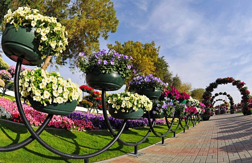 парк цветов  Al Ain Paradise фото 8 (500x324, 82Kb)