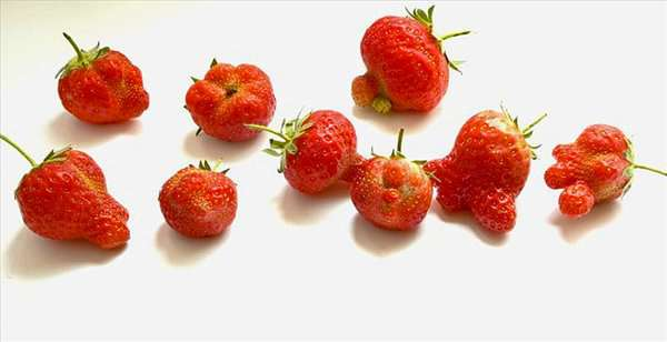 deformed_strawberries_02 (600x308, 31Kb)