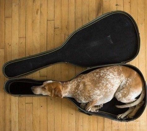 собака в футляре (474x421, 45Kb)