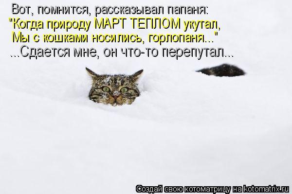 kotomatritsa_2Z (600x399, 33Kb)