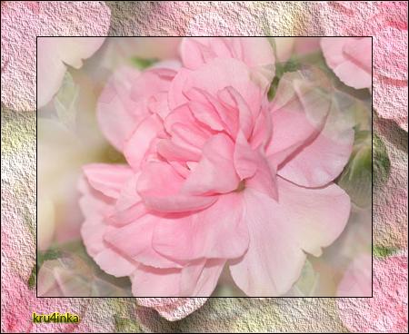 Нежная-розовая (450x368, 329Kb)