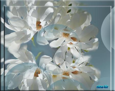 Белые-цветы (450x356, 222Kb)