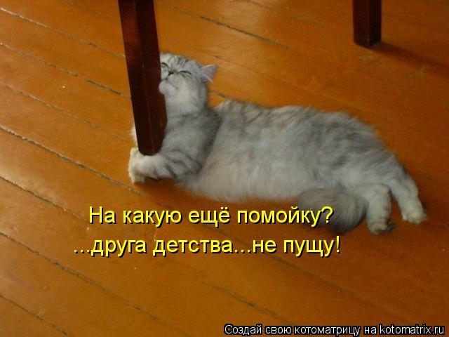 kotomatritsa_2O (640x480, 38Kb)