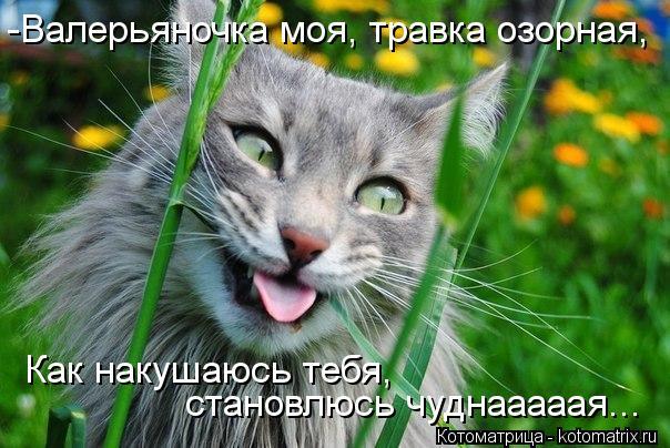 kotomatritsa_B6 (604x404, 64Kb)
