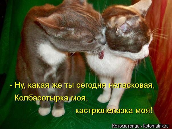 kotomatritsa_K (604x453, 48Kb)