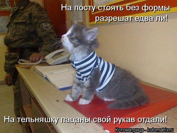 kotomatritsa_n (604x453, 54Kb)
