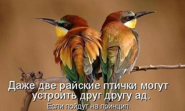 4278666_1Wmkce2drA (597x358, 72Kb)