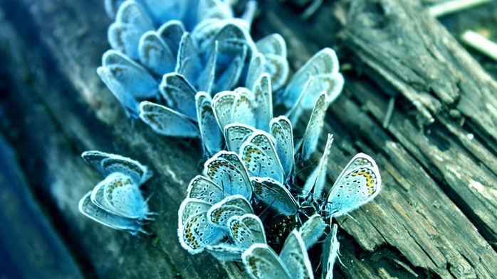 Butterfly on a Tree (700x393, 238Kb)