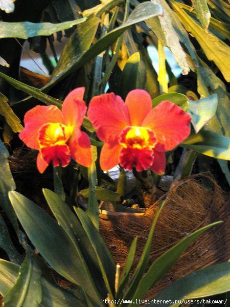 Орхидеи в МГУ/1413032_02orhidei (450x600, 156Kb)