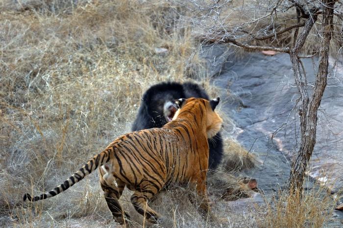 фотографии дикой природы 2 (700x466, 184Kb)
