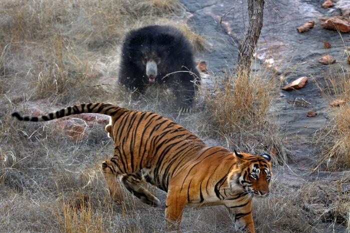 фотографии дикой природы 5 (700x466, 188Kb)