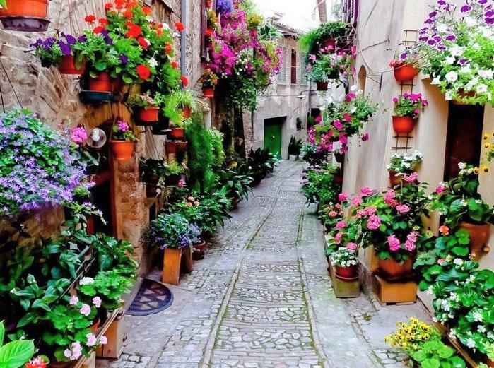 фото цветов уличных: