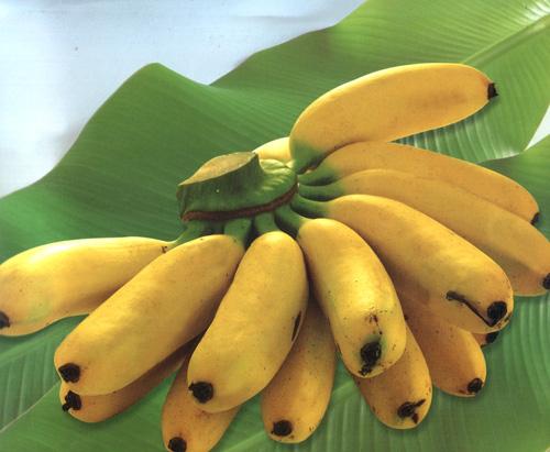 3768849_banani (500x411, 74Kb)