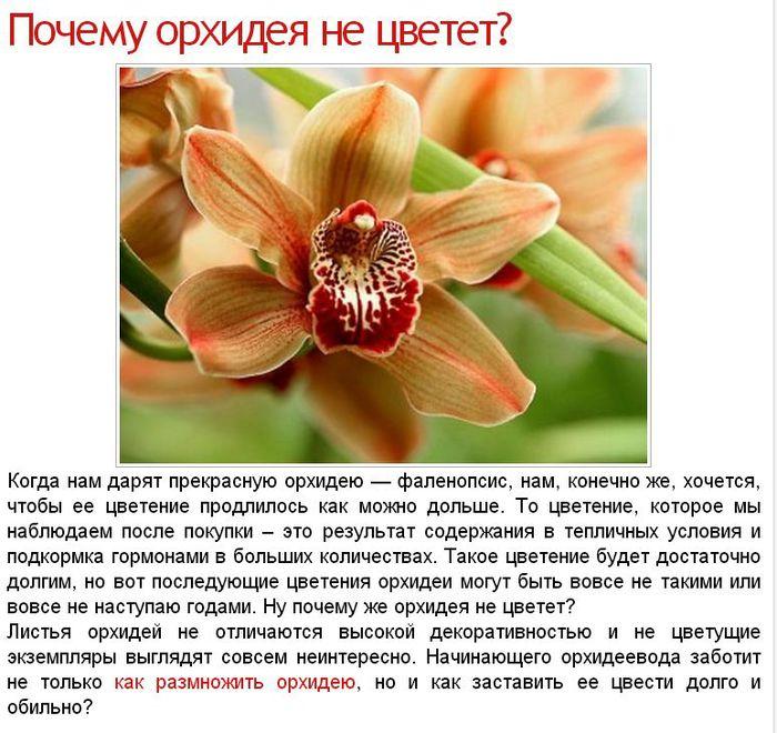 Почему орхидея в домашних условиях не цветет