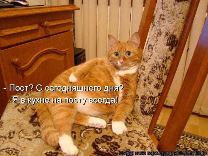 kotomatritsa_1I (700x524, 65Kb)