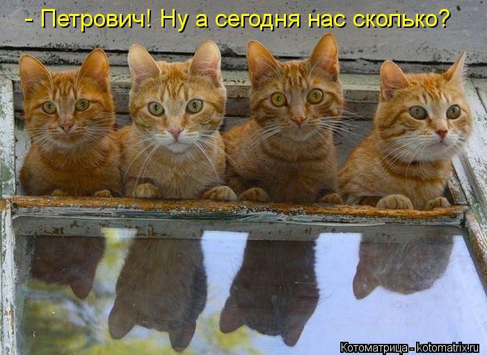kotomatritsa_7n (700x510, 73Kb)