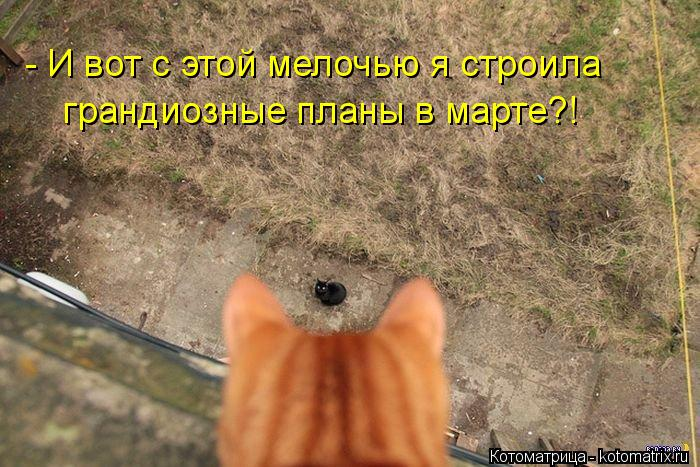 kotomatritsa_iT (700x467, 84Kb)