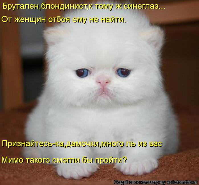 kotomatritsa_mz (700x650, 51Kb)