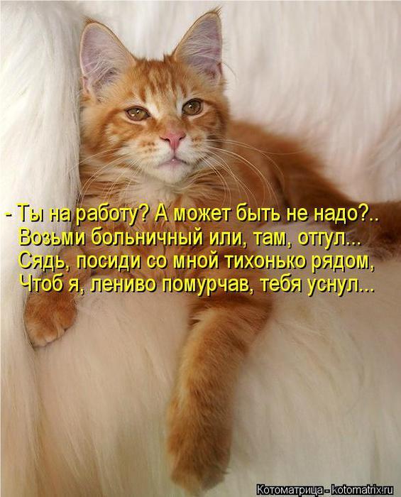 kotomatritsa_rA (565x700, 60Kb)