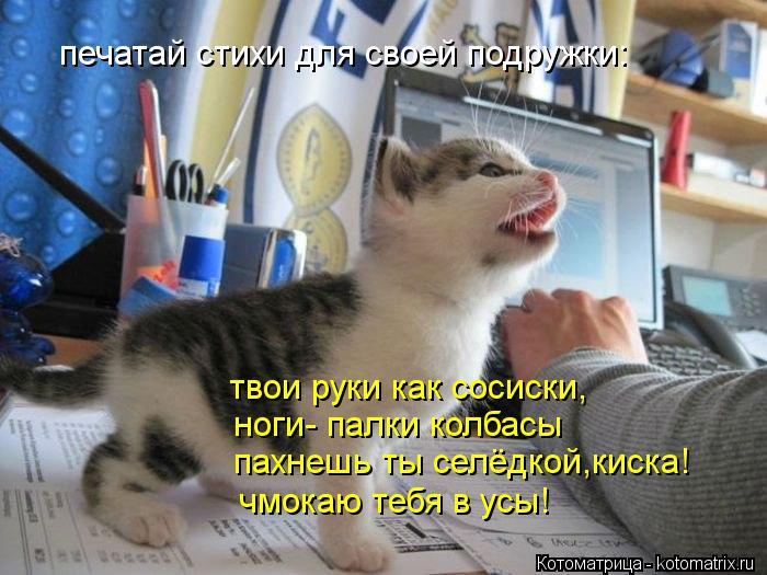 kotomatritsa_ZC (700x525, 70Kb)