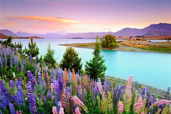 озеро текапо новая зеландия 1 (700x466, 112Kb)