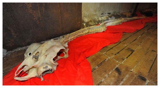 Необычный скелет найден в китайском море