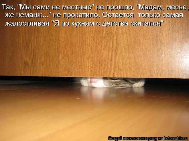 kotomatritsa_2l (660x495, 50Kb)