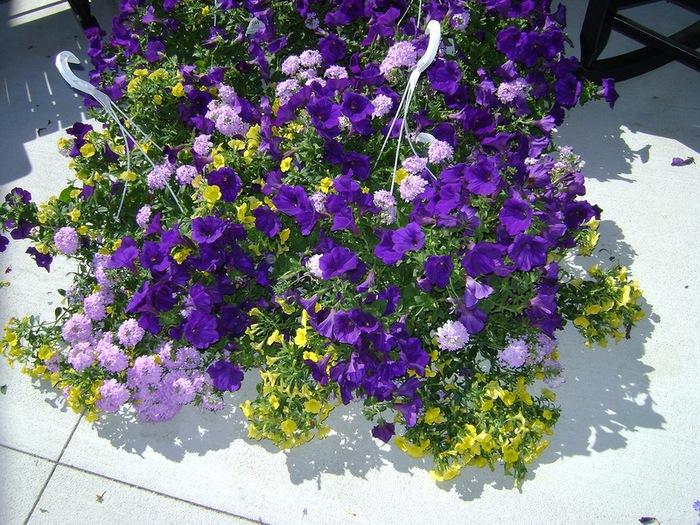 красивые цветы фото 2 (700x525, 205Kb)