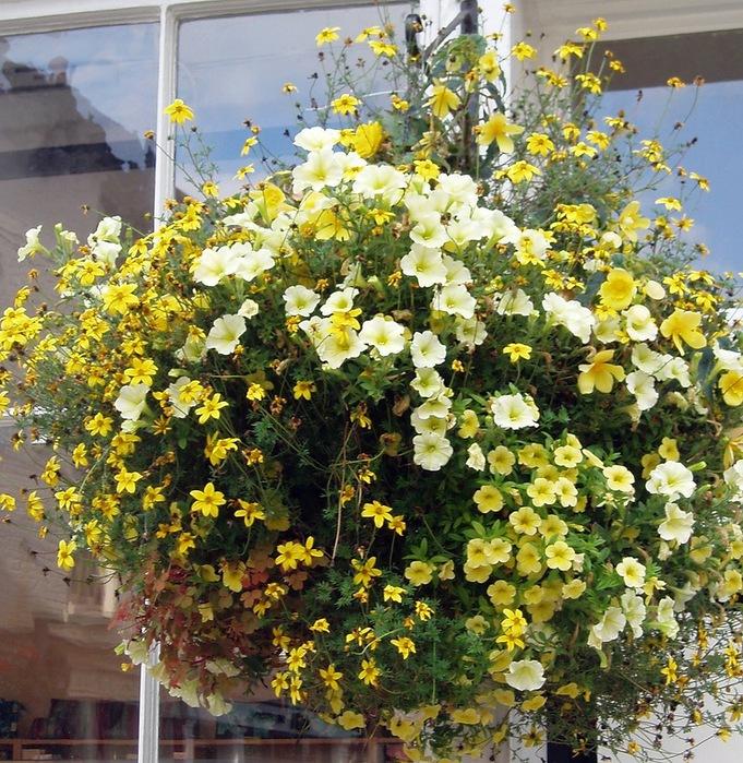 красивые цветы фото 4 (681x700, 239Kb)
