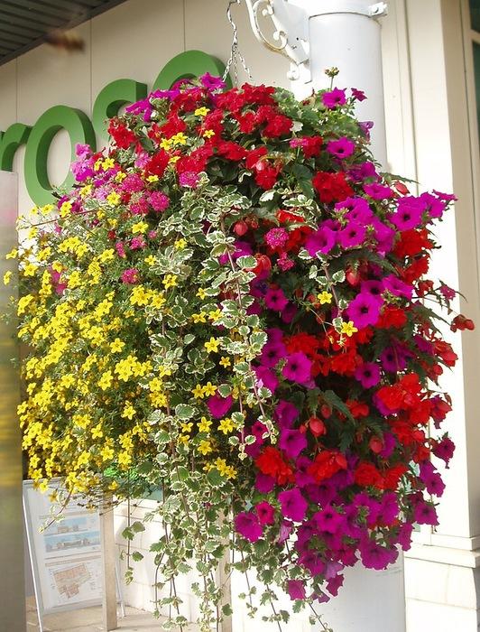 красивые цветы фото 5 (532x700, 194Kb)