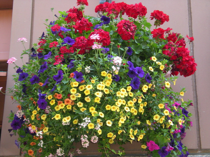 красивые цветы фото 9 (700x525, 201Kb)