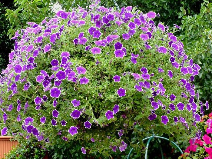 красивые цветы фото 11 (700x525, 257Kb)