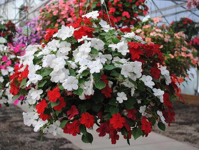 красивые цветы фото 13 (700x529, 161Kb)