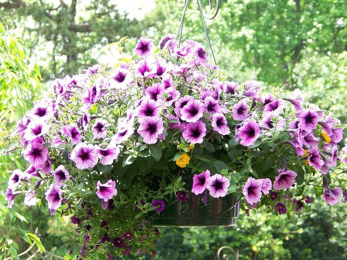 красивые цветы фото 15 (700x525, 202Kb)