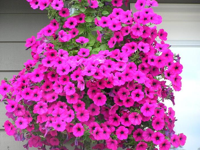 красивые цветы фото 16 (700x524, 206Kb)
